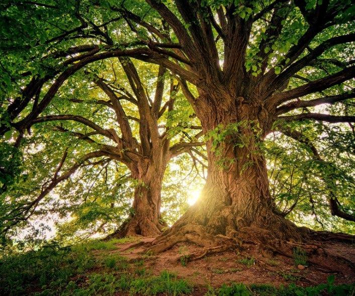 image d'une forêt